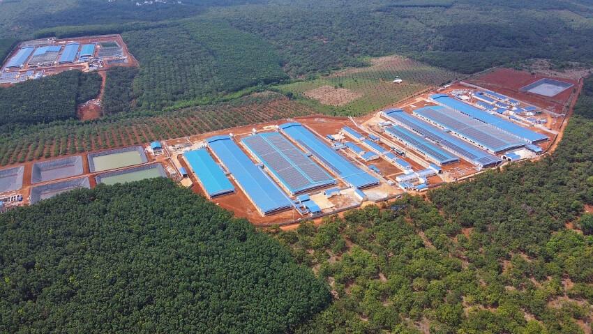 trang trại heo JAPFA Bình Phước